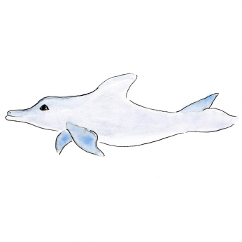 Baby Dolphin drawing drawing by Miss Coco
