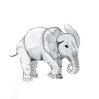 Baby Elephant drawing by Miss Coco