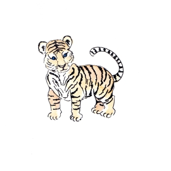 Baby Tiger drawing by Miss Coco