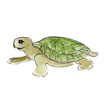 Baby Tortoise drawing by Miss Coco