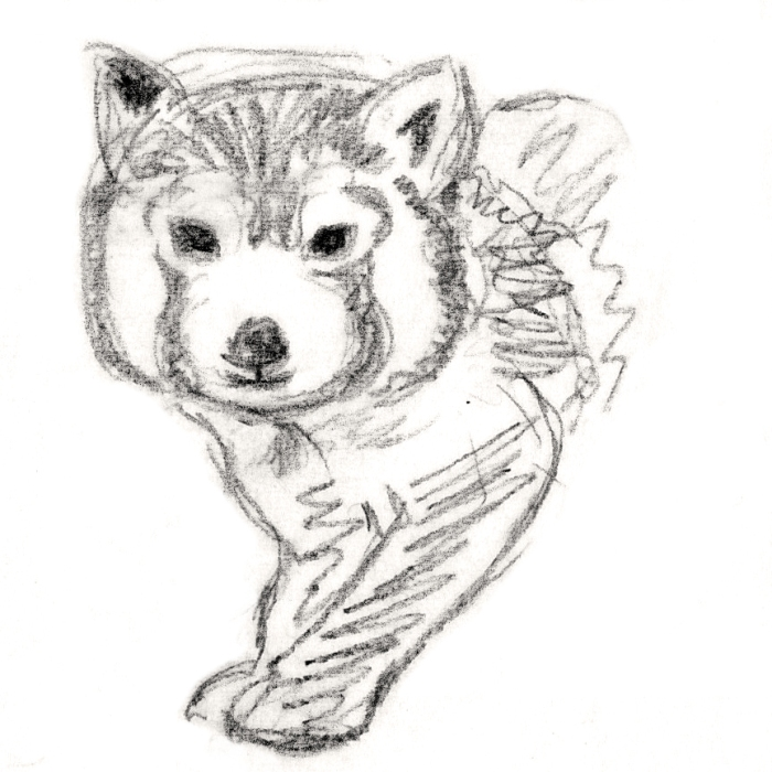 Red panda drawing by Miss Coco
