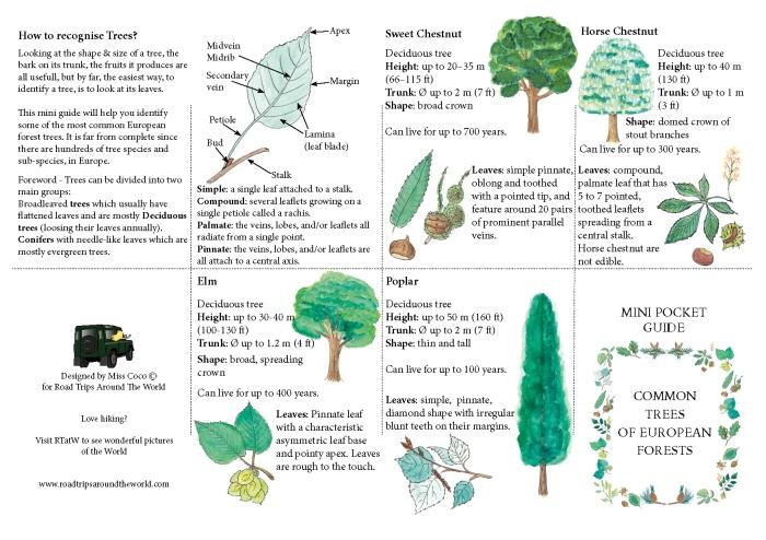Mini Guide on Trees available on www.RoadTripsaroundtheWorld.com